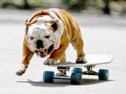 alg-skateboard-dog-jpg