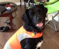 jack hunting vest