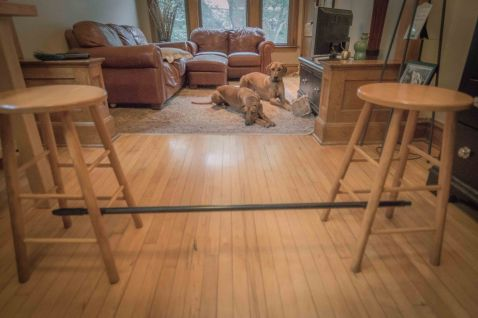 dog broomstick jump