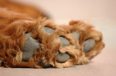 dog foot fur.jpg