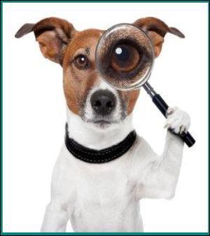finditdog