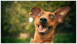 happy-dog-photos-1
