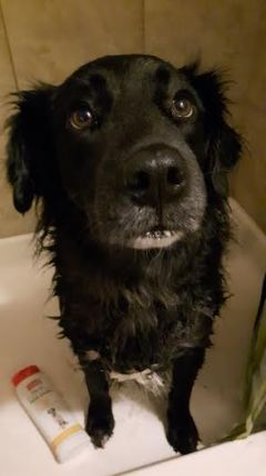 Jack in bath