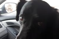 jack in car