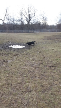 jack running in puddle