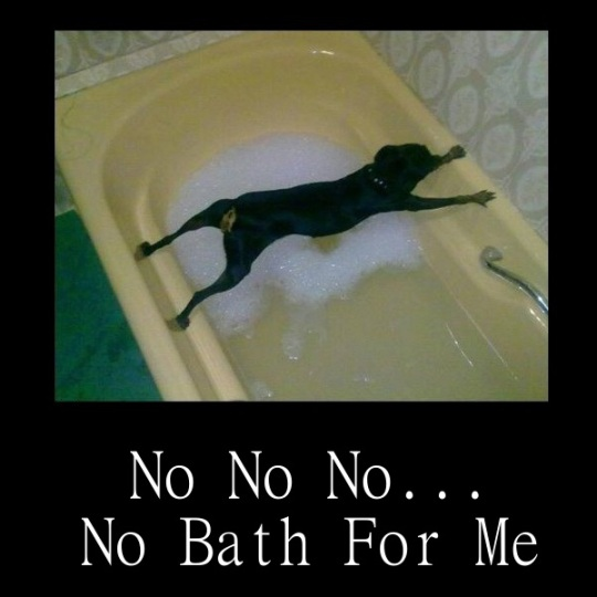 No-bath-for-me-funny-og.jpg