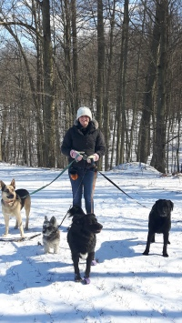 dog hike at jordan station with kaitlyn, jack, nikki, shiloh, and allie