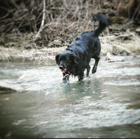Jack in creek