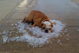 dog ice cubes
