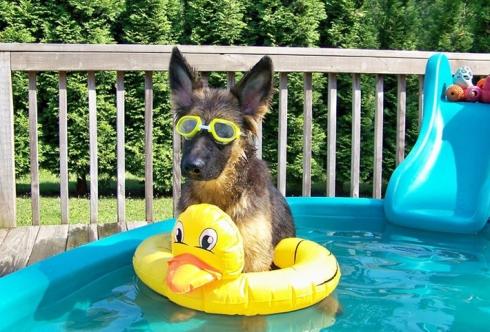dog in kiddy pool